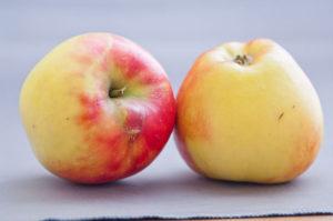 czy jabłka pomagają w odchudzaniu